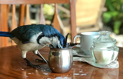 bird-drinking-from-a-milk-jug