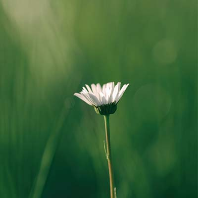 A flower growing in green grass