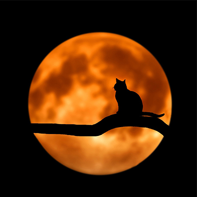Cat against a blood red moon