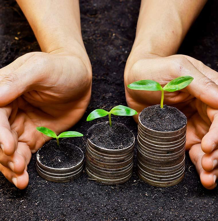 Hands-around-new-seedlings